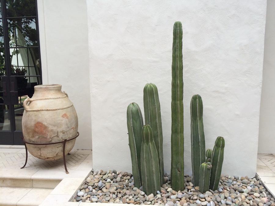 cacti-pot